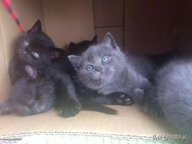 猫的智商到底能有多高?看网友家小黑猫的神操作吧-第6张图片-深圳宠物猫咪领养送养中心