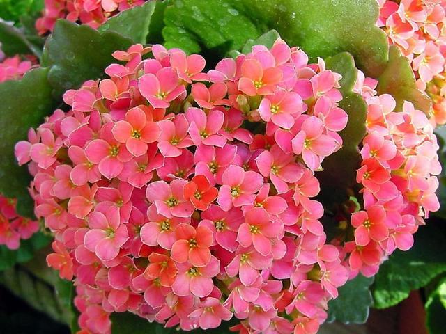 冬天扦插繁殖这九种绿植,特别容易成活,来年看花团锦簇