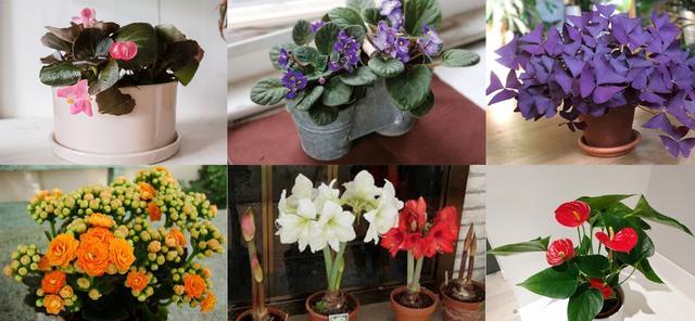 室内盆栽植物图片及名称 室内盆栽花卉大全_乌托家家居网
