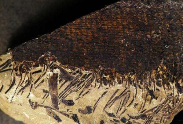 新疆发现最古老森林,距今已有3.71亿年历史-第1张图片-IT新视野