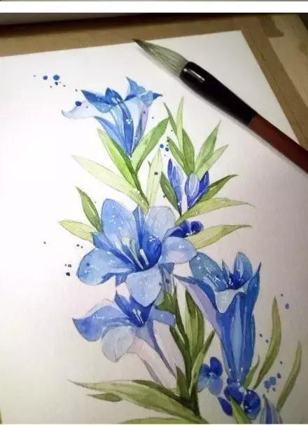 水彩画花卉教程步骤图