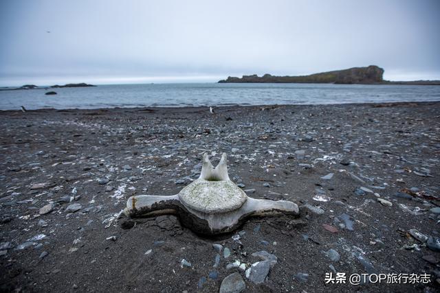 2020年的新鲜南极,是惊喜还是惊吓?摄影师亲历冰封之地的可怕、美好、古老、奇迹…