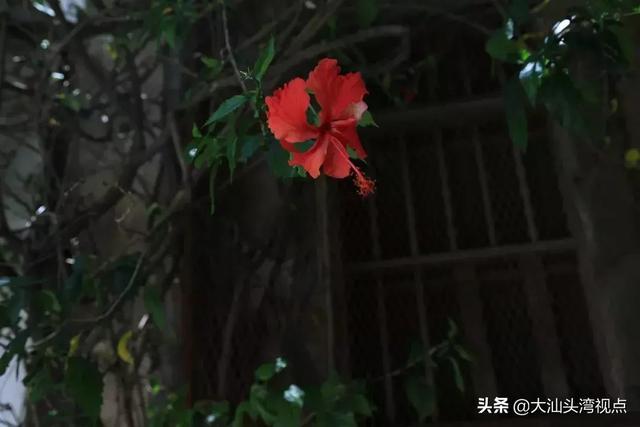 """印象汕头埠  """"四永一升平""""中南北生意往来最密切的一条街"""