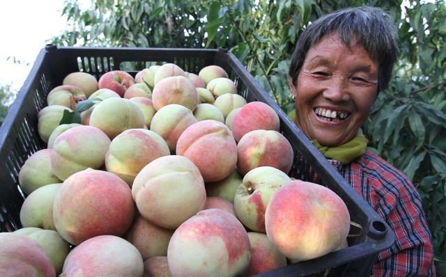 冬桃的营养价值你了解多少-九州醉餐饮网