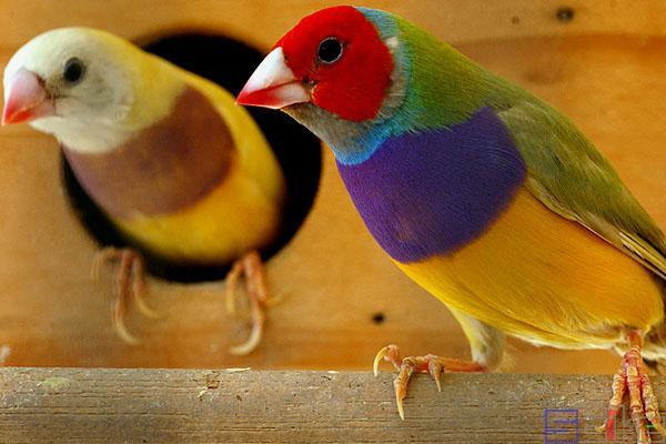 鸟类大全图片及鸟名