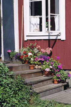 6平米的小庭院,如何打造梦想花园?