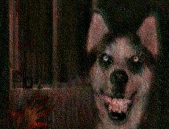 微笑狗是什么,微笑狗原图(胆小勿入)-第1张图片-IT新视野