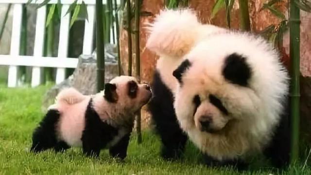 熊猫图片大全可爱卡通