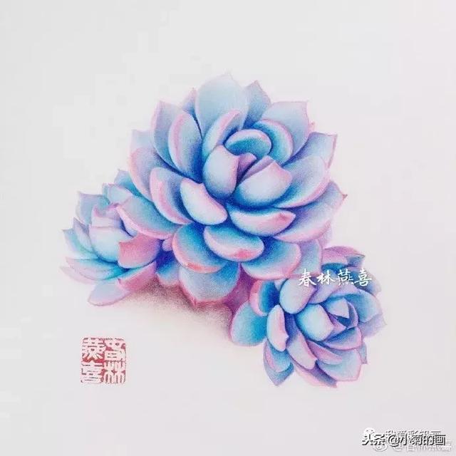 彩铅:手绘娇嫩的多肉——蓝石莲