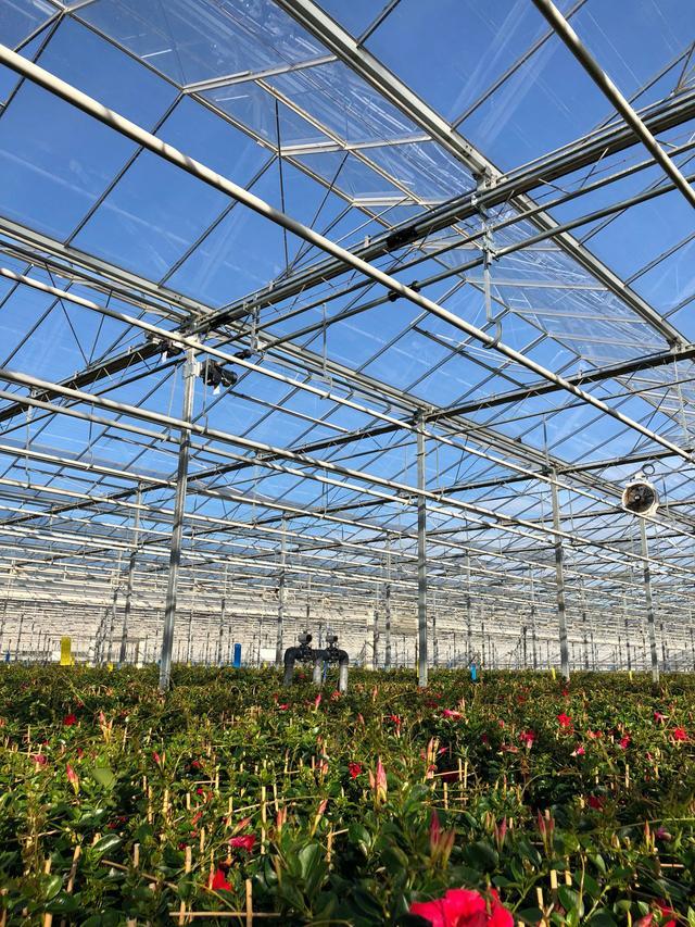 亲民的价格,荷兰级品质的玻璃大棚原来这么设计建造
