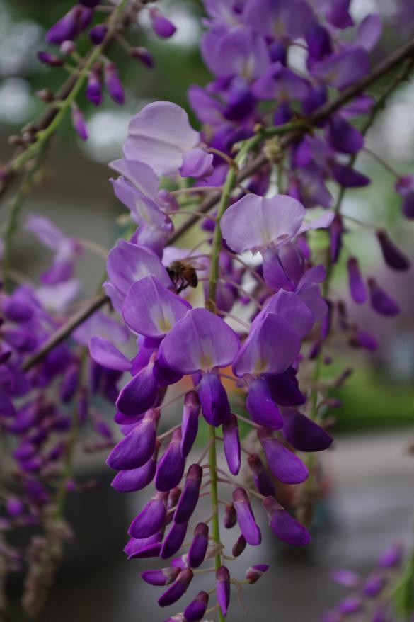 养这3种花,易活花期长,让你的庭院花开成瀑布