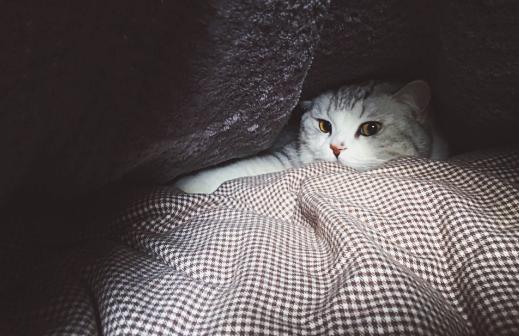 猫咪在家里上蹿下跳,这是天性使然,铲屎官可千万别去改变它们-第7张图片-深圳宠物猫咪领养送养中心
