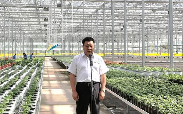 从靠天吃饭到稳产增收,设施农业解粮忧