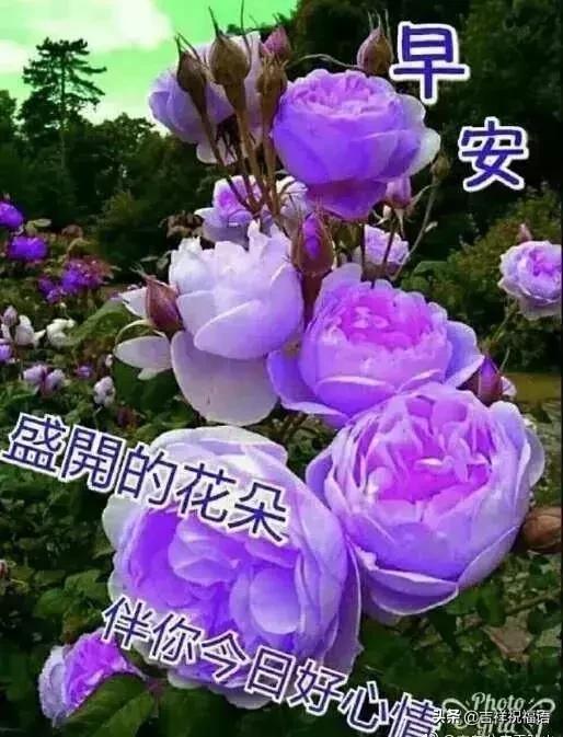 早上好图片,动态早上好表情图片大全(2)_QQ问候表情_窝窝QQ网