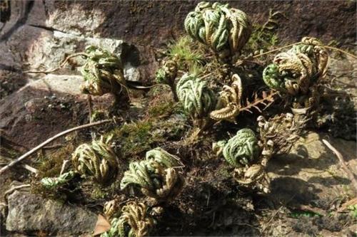 象征生命力顽强的植物