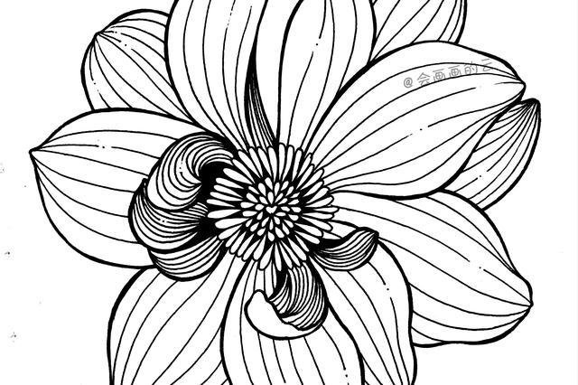 春天的花简笔画