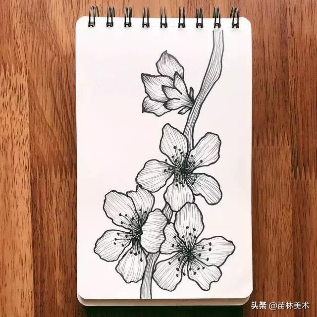 素材 | 一组线稿花卉手绘临摹素材