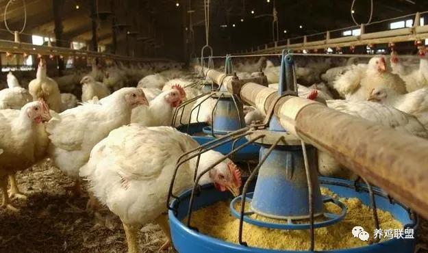 羊的采食量怎么计算