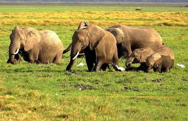一带一路爆红的肯尼亚,适宜的旅行季只在78月吗?需要攻略看进来