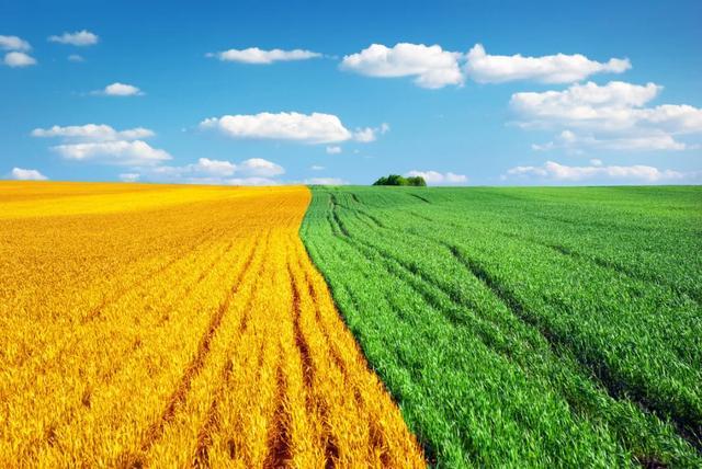 农业到底多重要?你真的了解农业吗?
