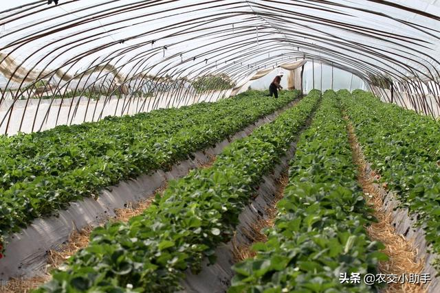 一亩地的常规蔬菜大棚种植成本及种植利润分析