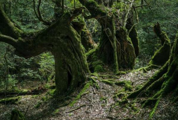 新疆发现最古老森林,距今已有3.71亿年历史-第4张图片-IT新视野