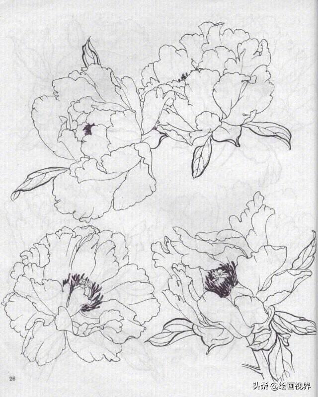工笔牡丹白描底稿