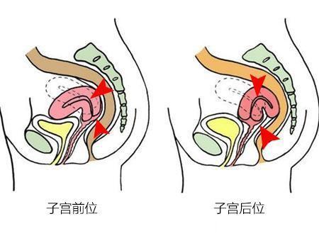 怀孕b超图片男女