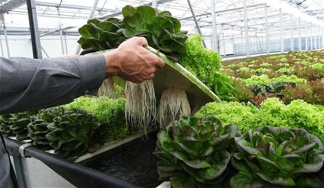 PVC管自制立体花盆,阳台再小也能种菜了!_山草香