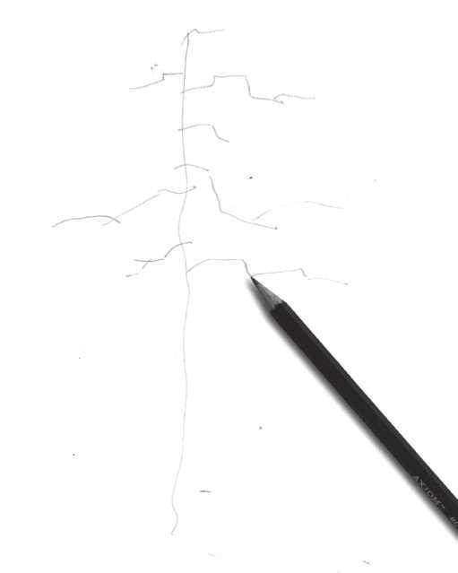 怎么样用速写方式画植物?分步骤教你3种常见植物速写画法,学习