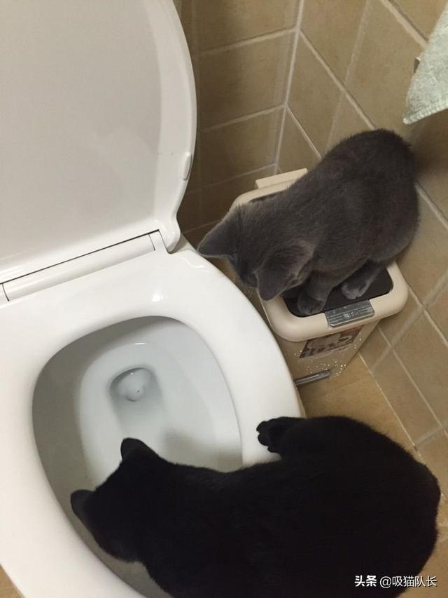 猫的智商到底能有多高?看网友家小黑猫的神操作吧-第9张图片-深圳宠物猫咪领养送养中心