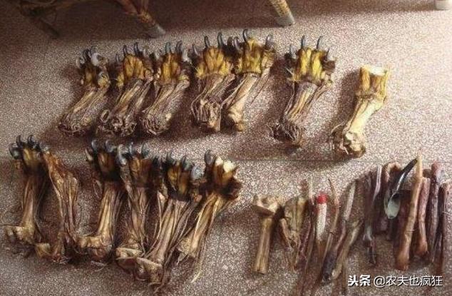 """在农村集市上,常有小商贩售卖的""""虎骨""""、""""熊掌""""类珍贵药材,都是真的吗?"""