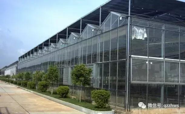 连栋薄膜温室大棚与玻璃温室优缺点对比及其适用场景