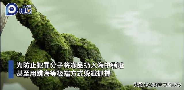 """480吨!广东上千警力""""围剿""""走私冻肉,一举捣毁冻库窝点"""