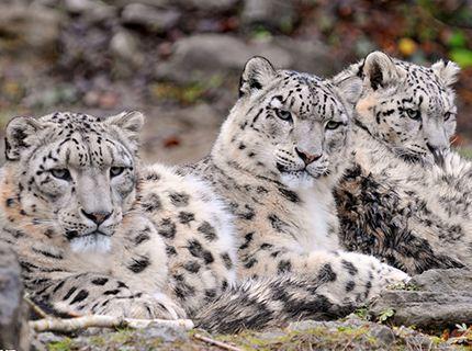 广西这23种国家一级重点保护野生动物,你应该会知道