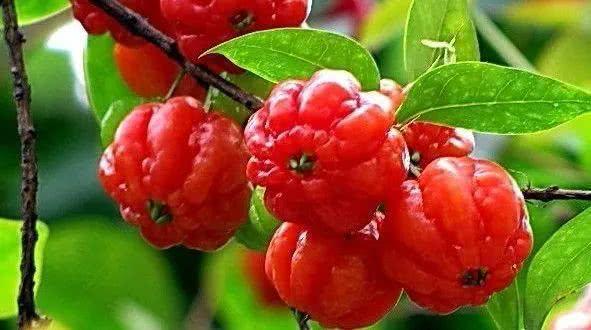 最全水果大全来啦!哪些水果既好吃又低卡?图图告诉你