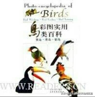 动物图集:白冠噪鹛