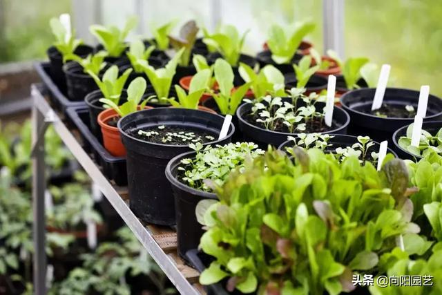 新鲜绿色有机蔬菜图片-花卉壁纸-高清花卉图片-娟娟壁纸