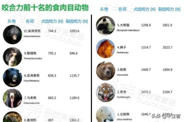 中国为什么会选择熊猫作为国宝呢?