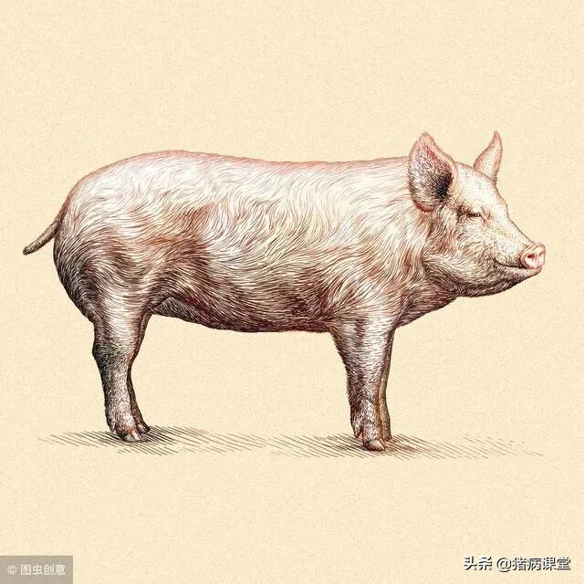 仔猪脑炎症状及治疗?