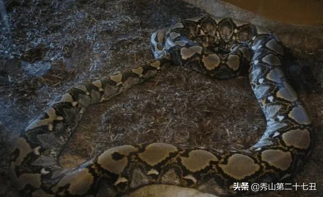 亚马逊最大的蛇