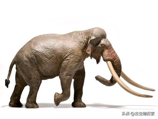 巨象迷你版可能会被巨型天鹅欺负!