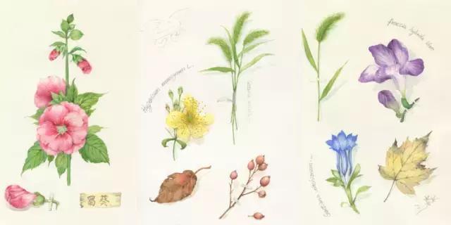 水彩笔画图片大全--秋天的故事◆肉丁儿童网