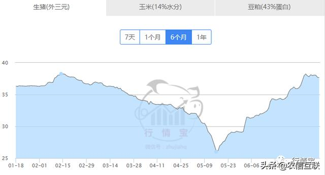 最新猪价预测:8月猪价必涨!官方:6-9月猪肉价格上涨