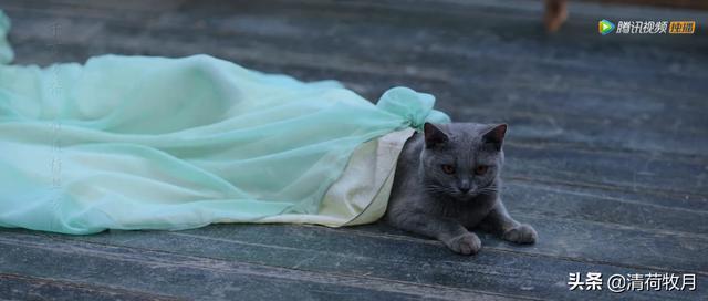 黑马电影《美人皮》的另一个结局:顾道士和猫