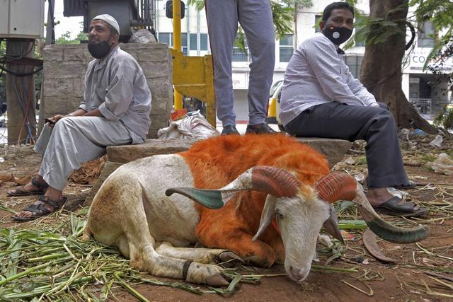 一只山羊因未戴口罩上街而被逮捕?疫情之下,印度人操作很迷