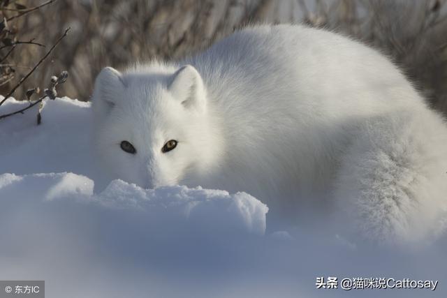 狐狸图片手绘