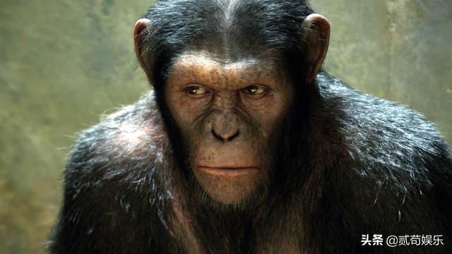 揭秘历史上苏联那些骇人实验:双头犬、复活已死动物、猩猩人