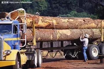 11月2日全国主要口岸木材市场价格行情