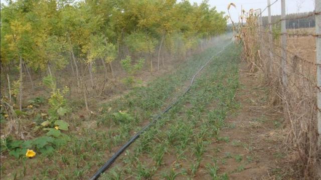 传统农业灌溉的图片